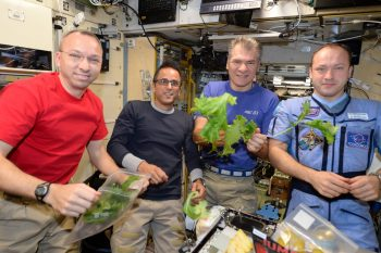 Space lettuce harvest. Credits: ESA/NASA