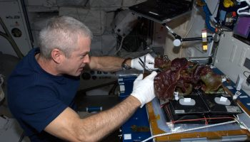 Steve Swanson caring for our salads in the Veggie experiment. Credits: ESA/NASA