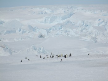 The landscape at Terre Adelie – icebergs and Emperor penguins. Credits: ESA/IPEV/PNRA-A. Golemis