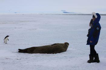 Beth enjoying the Antarctic wildlife of the coast. Credits: ESA/IPEV/PNRA–B. Healey