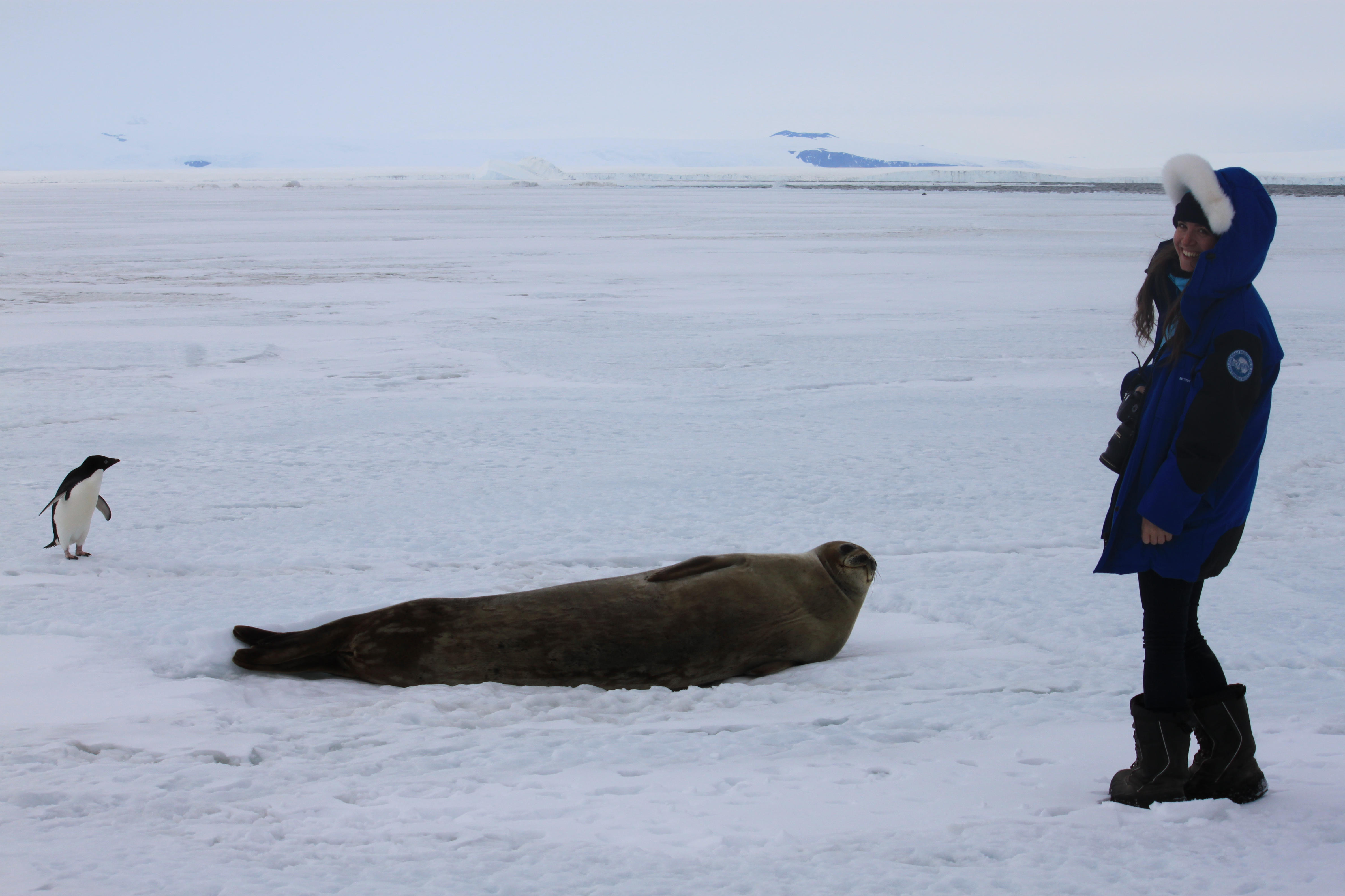 Part 6 the traverse chronicles from concordia beth enjoying the antarctic wildlife of the coast credits esaipevpnra publicscrutiny Image collections