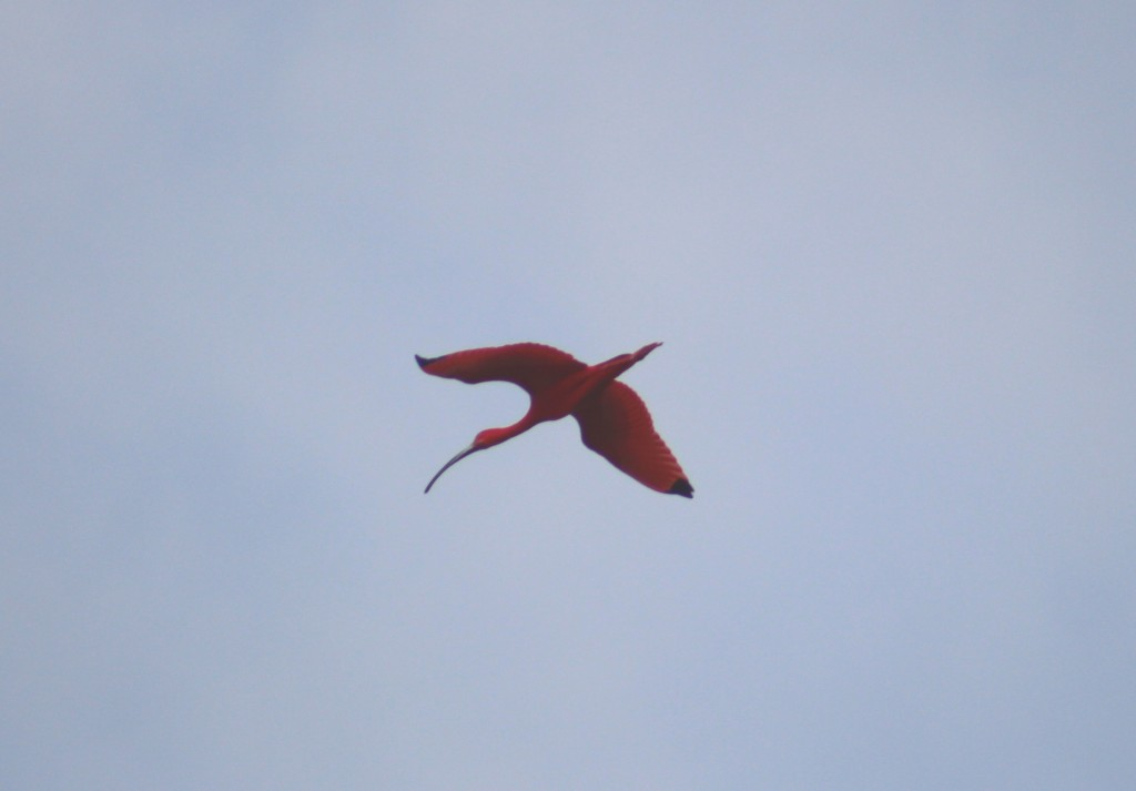 Bird spotting: a red ibis! (ESA/C. Wildner)