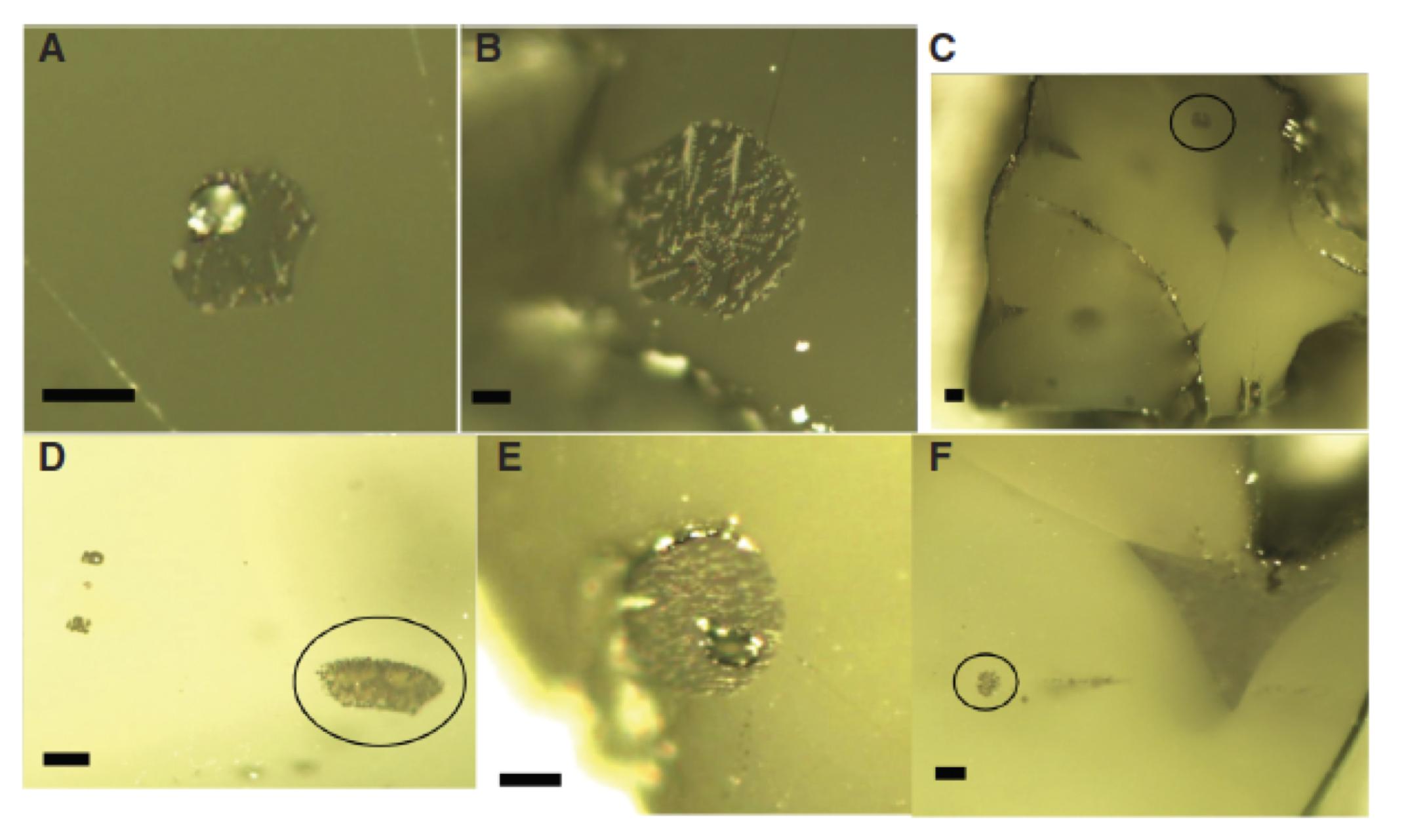 Pre-eruptive Crystals